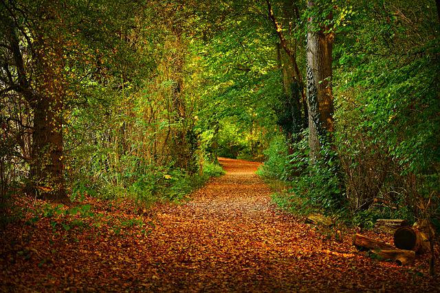 Forest Path, Woodland, Tree, Leaves, Carpet Of Leaves