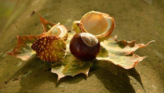 Chestnut, Autumn, Golden October, Leaves, Spur, Shell