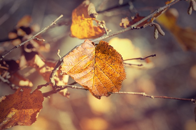 Leaves, Fall Leaves, Autumn, Colored, Fall Foliage