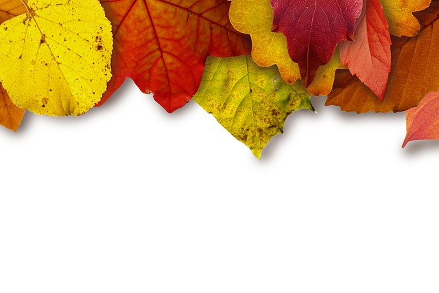 Leaves, Colorful, Color, Yellow, Red, Brown