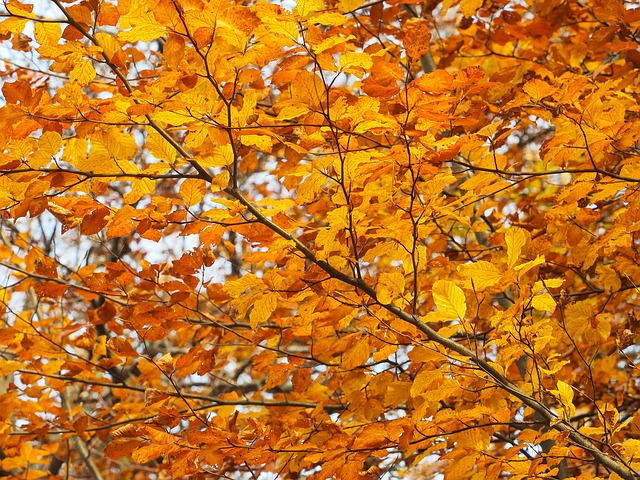 Fall Colors, Leaves, Colors, Autumn Leaves, Yellow