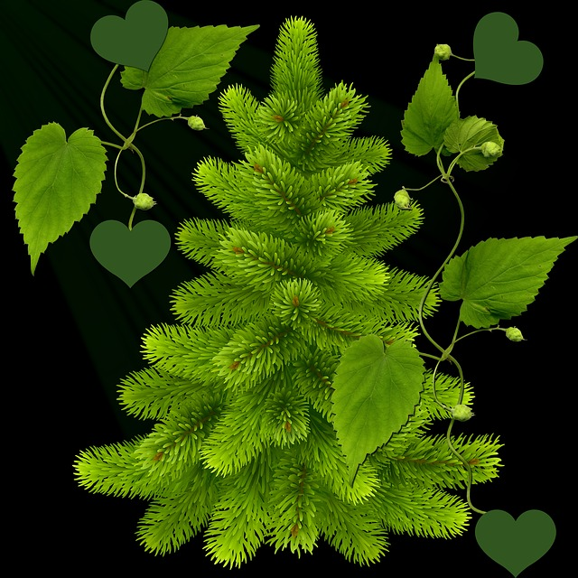 Decoration, Green, Black Background, Leaves, Hearts