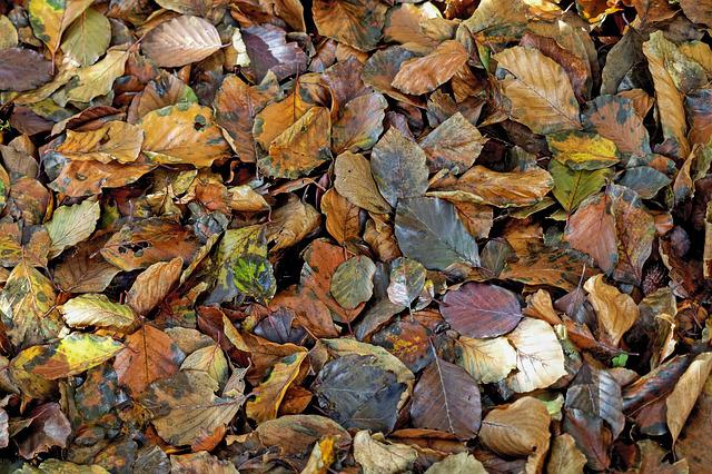 Leaves, Fall Leaves, Beech, Autumn, Fall Foliage