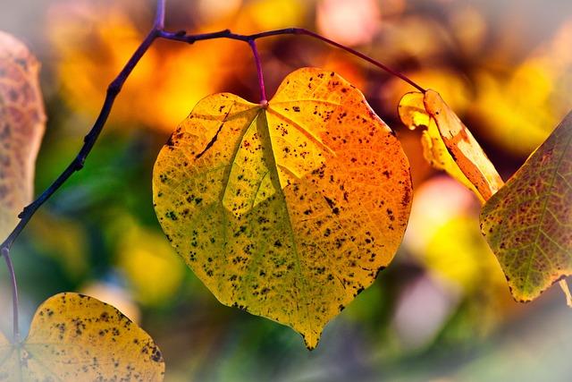 Autumn, Leaves, Season, Botany, Branch, Fall, Growth