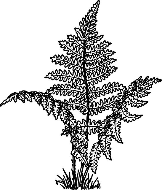 Ferns, Vascular, Plants, Leaves, Flowerless, Seedless