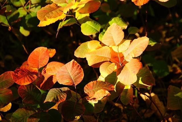 Sumac, Leaves, Autumn, Red, Nature, Foliage
