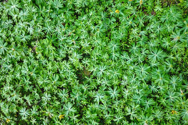 Plant, Foliage, Leaves, Ground Covering, Covering