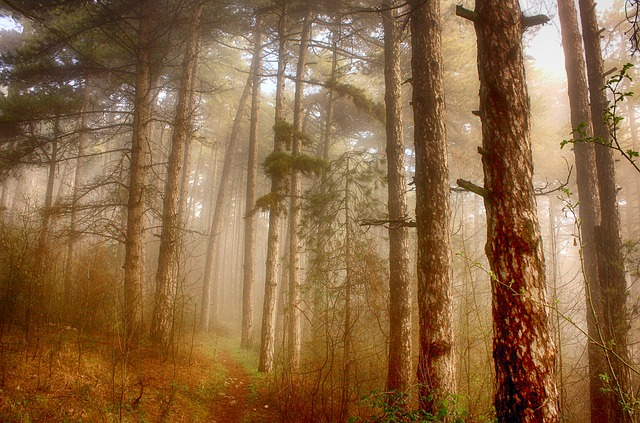 Forest, Trees, Wood, Branch, Forest Trees, Leaves