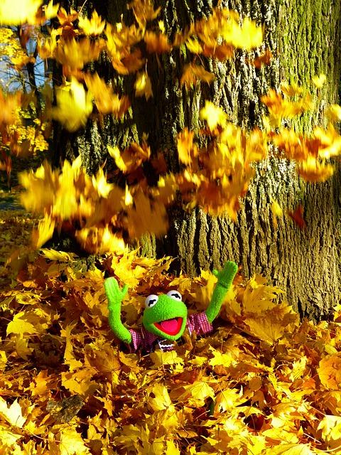 Leaves, Colorful, Sheet Rain, Fun, Kermit, Frog