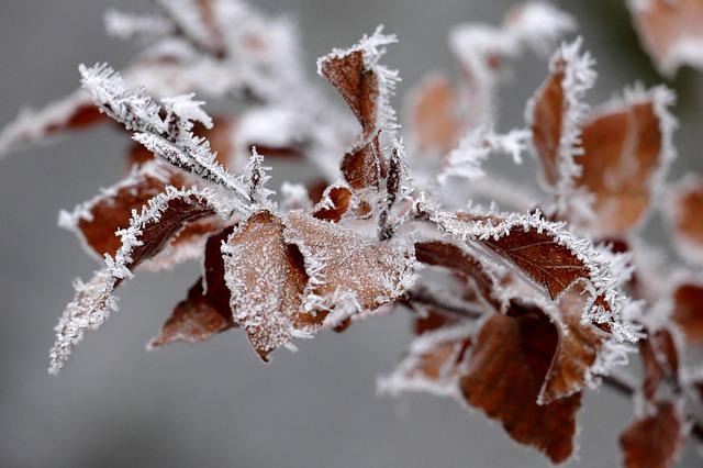 Leaves, Eiskristalle, Hoarfrost, Close Up, Cold, Frost