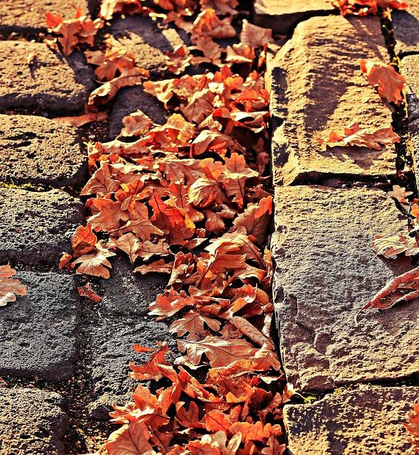 Autumn, Leaves, Golden Autumn, Leaves In The Autumn