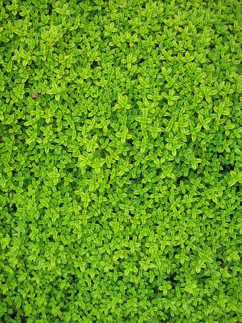 Garden, Plants, Leaves, Ivy, Greenery, Foliage, Flora