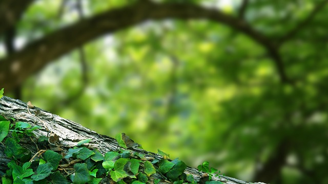 Branch, Landscape, Macro, Twig, Leaves, Tree Branches