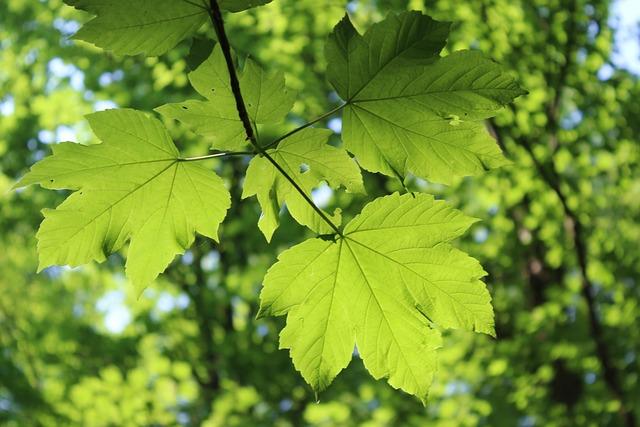 Leaf, Leaves, Shadow, Green Leaf, Green, Nature