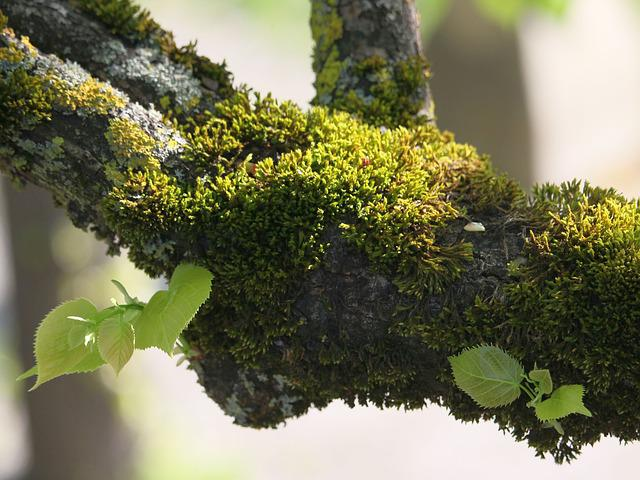 Tree, Branch, Plant, Moss, Nature, Close, Leaves