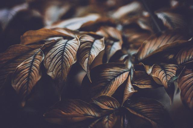 Leaves, Autumn, Nature, Fall, Forest, Leaf, Spring