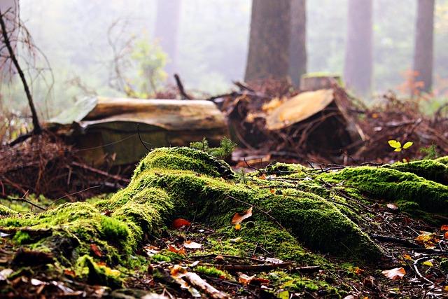 Forest, Moss, Tree Stump, Leaves, Autumn, Fog, Nature