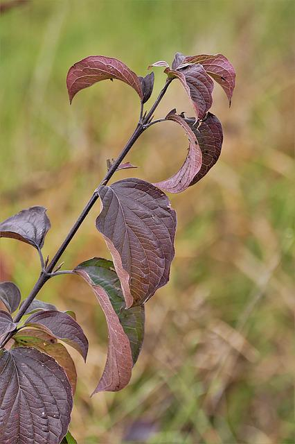 Leaves, Red, Autumn, Close, Discoloration, Nature