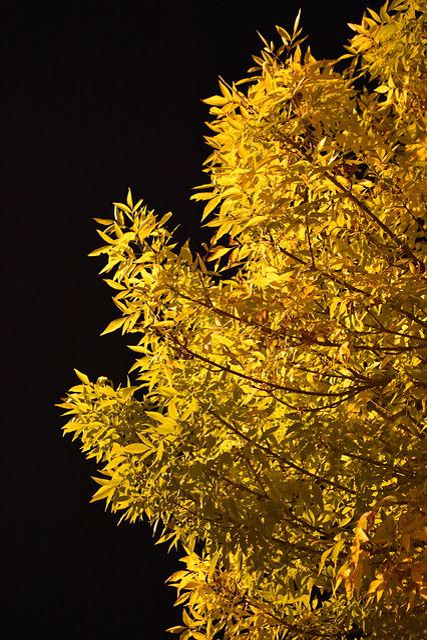 Autumn, Leaves, Night, Dark, Contrast, Colors, Season