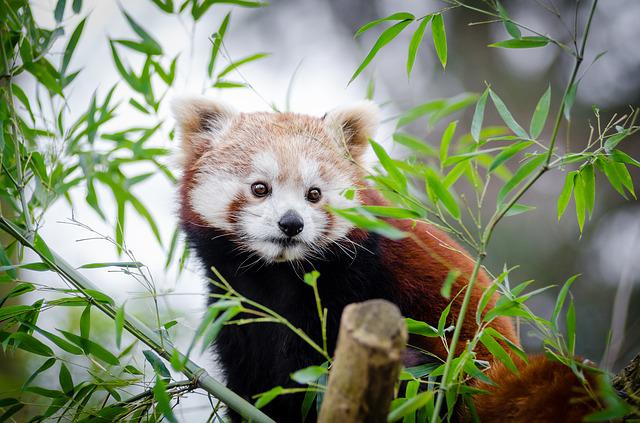 Adorable, Animal, Cute, Leaves, Outdoors, Pet