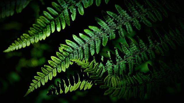 Fern, Leaves, Green, Nature, Plant, Forest, Symmetry
