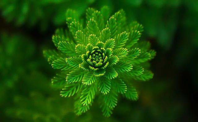 Fern, Leaves, Green, Nature, Purity, Fresh, Symmetry