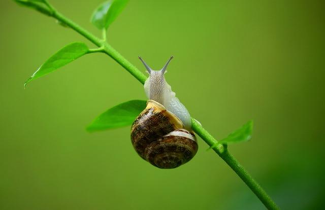 Animal, Gastropod, Leaves, Macro, Mollusk, Snail