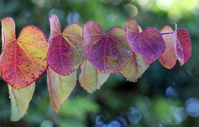 Leaves, Leaf, Colorful, Spring, Rain, Raindrop, Purple