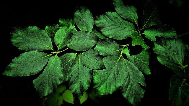 Leaves, Summer, Green, Black Background, Nature