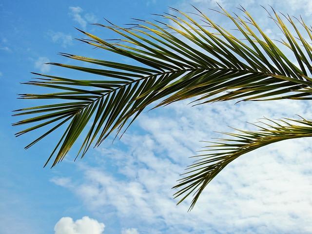 Palm, Plant, Leaves, Sun, Summer, Sea, Lake, South Sea