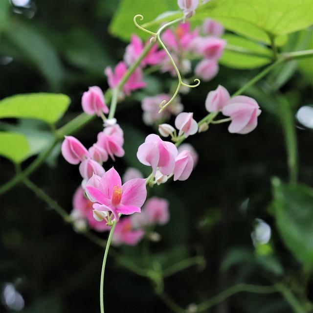 Flowers, Pink, Leaf, Leaves, This Safari, These People