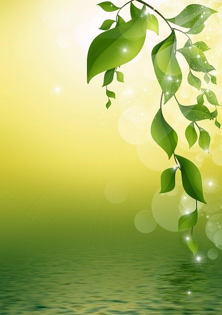 Leaves, Twigs, Floral, Reflection, Water, Design