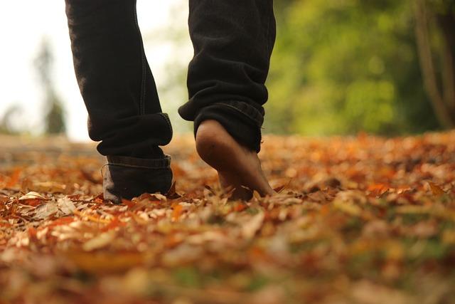 Walk, Woods, Leaves, Nature Walk, Evening
