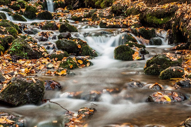 Forest, River, Kennedy, Waterfall, November, Leaves