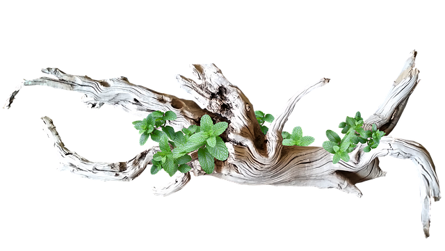 Driftwood, With, Leaves