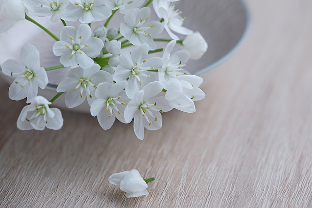 Flower, Flowers, White, White Flower, Leek Flower