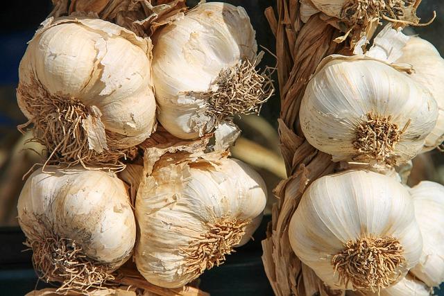 Garlic, Leek, Herb, Medicinal Plant, Allium, Vegetables