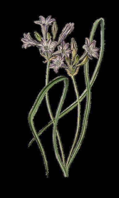 Leek, Ornamental Onion, Flower, Plant, Blossom, Bloom