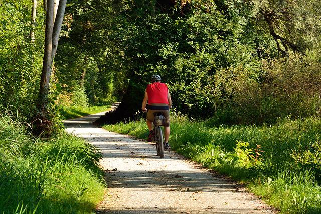 Cycling, Cyclists, Forest, Nature, Trees, Leisure