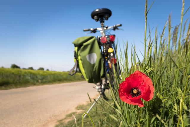 Cycling, Poppy, Leisure, Bike, Cycle Path