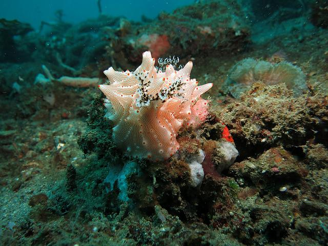 Water, Underwater, Nudibranch, Diving, Lembeh