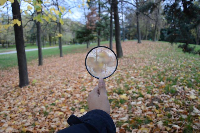 Search, Lens, Autumn, Leaves, Sky, Forest, Foliage