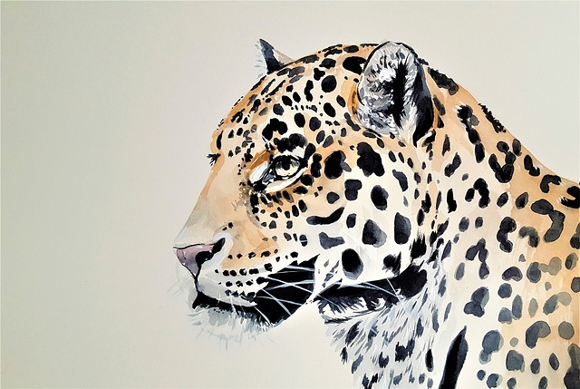 Leopard, Cat, Beast, Animal, Predator, Spots, Nature