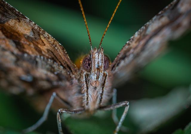 Butterfly, Lepidoptera, Macro