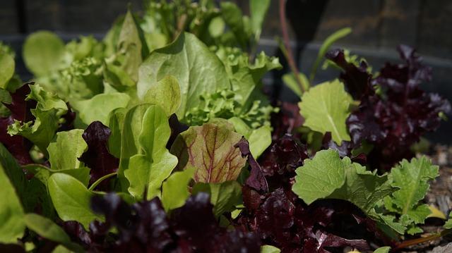 Food, Leaf, Flora, Nature, Vegetable, Lettuce
