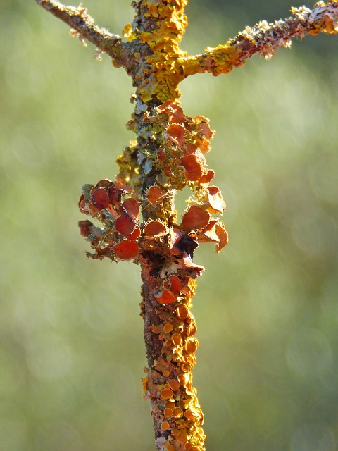 Trunk, Lichens, Lichen, Snorkel