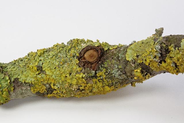 Branch, Eye, Lichen, Nature
