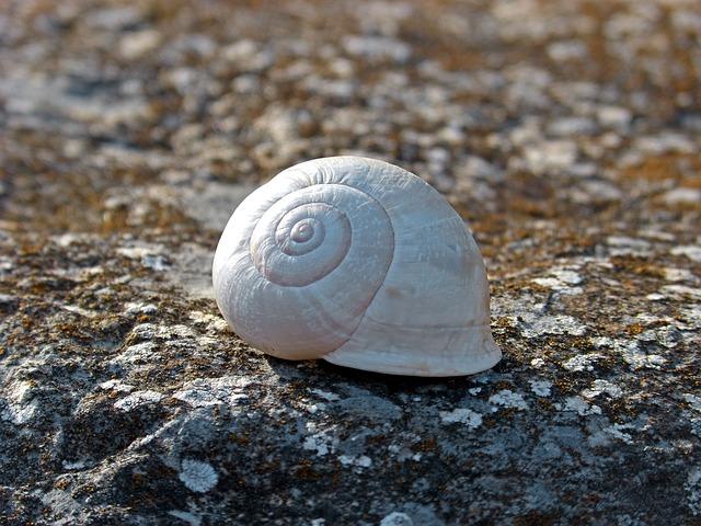 Snail, Spiral, Stone, Lichen