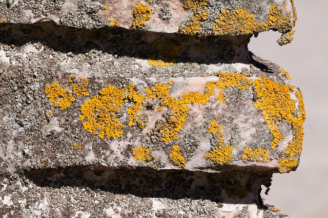 Wall, Detail, Lichen, Stone, Structure, Pattern