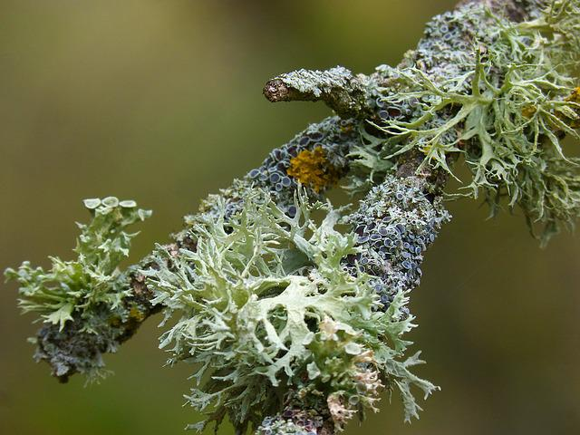 Branch, Lichen, Lichens, Detail, Beauty